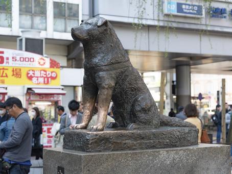 Hachikó – a hűség szobra