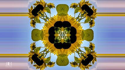 0806 Sunflower K.jpg