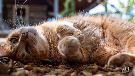 1012 Short Cat 2.jpg