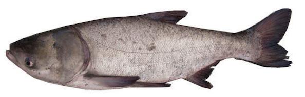 organic-fish | Organic Fish