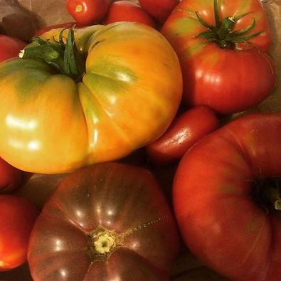 Fresh heirloom tomatoes ❤️❤️❤️ #urbanforaging #eatlocal #harvest #summer #heirloom #tomatoes