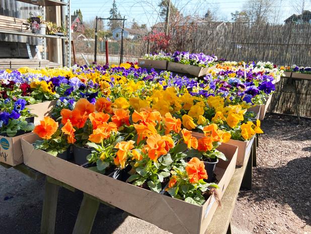 Blommor färger.jpg