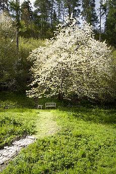 Charachasa-Garten
