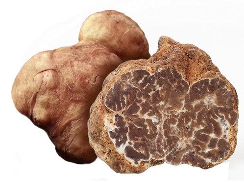 1 oz White Spring Truffle (Tuber Albidum Pico)