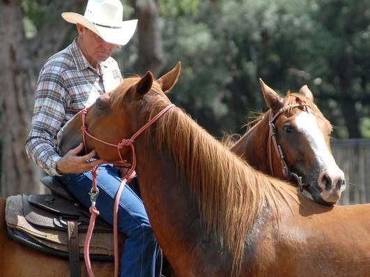 horse.skip.jpg