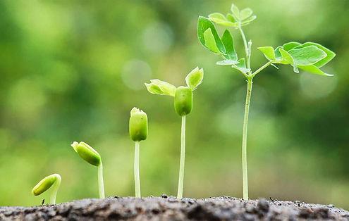 plants-growing.jpg