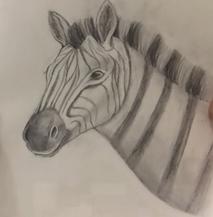 Kids_zebra.png