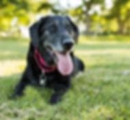senior-dog-outdoor-exercise-1.jpg