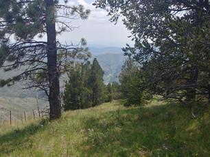 Tree ranch below