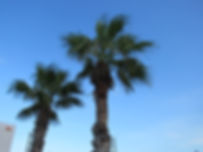 Palm trees at Laguna Shore Village RV Park