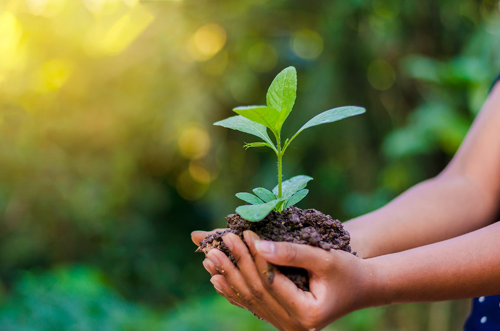 Earth Day In the hands of trees growing