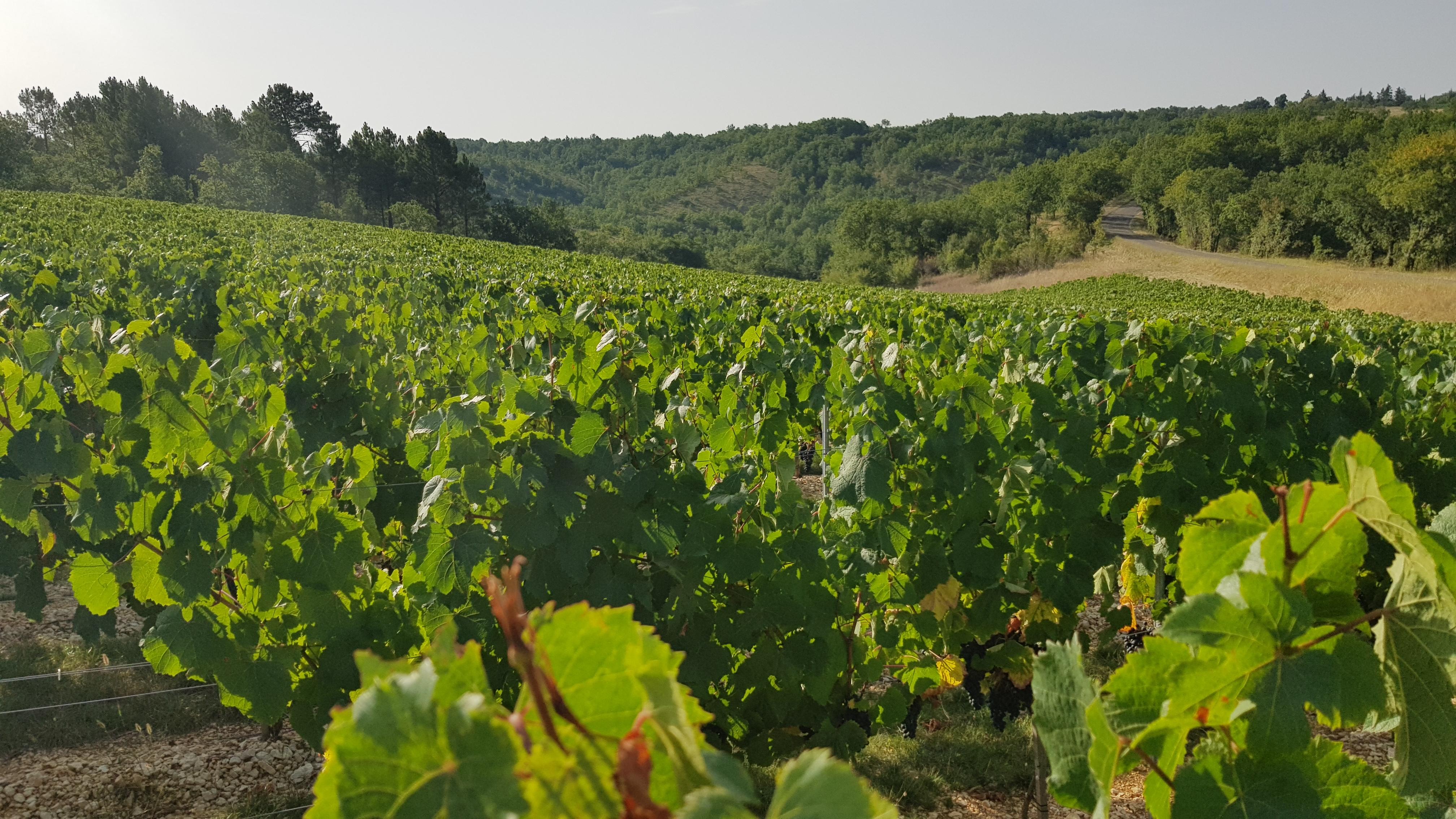 vignes du Château Plat Faisant