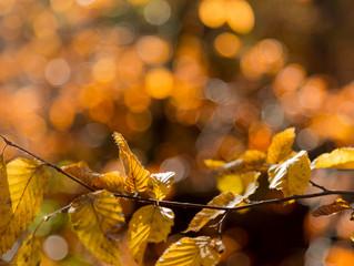 Herbstausflug Huppergruben Lausen