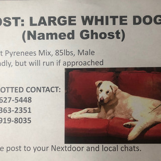 Flier for Ghost