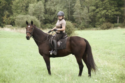 Standardbred on the trail.