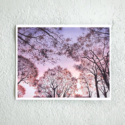 "Pink Frost 11""x14"" Print"