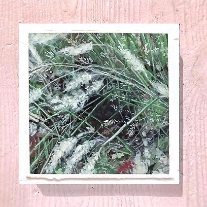 "Softest Grass (6""x6"")"