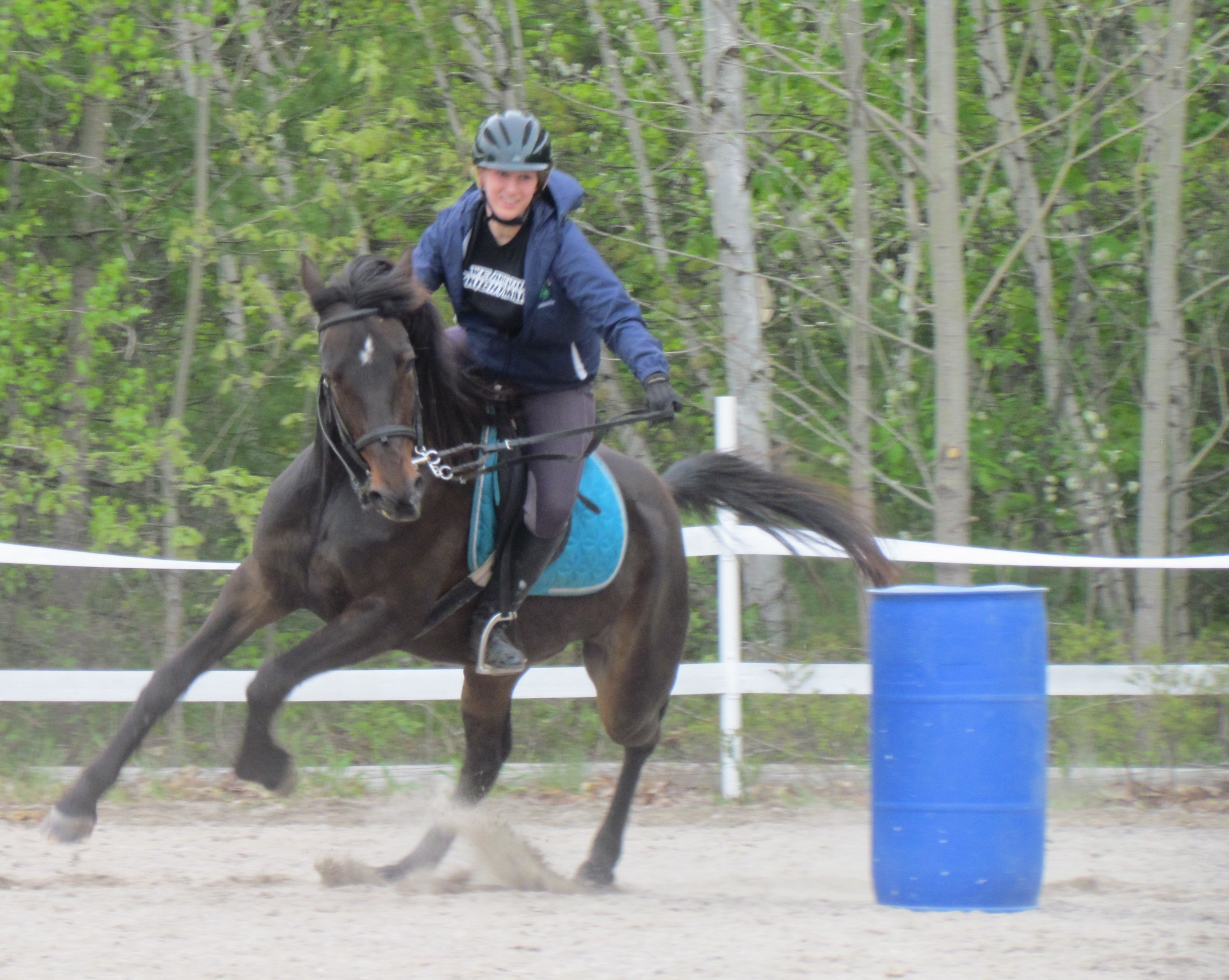 Standardbred, barrel racing.