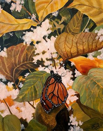 Milkweed Monarch - (24x30)