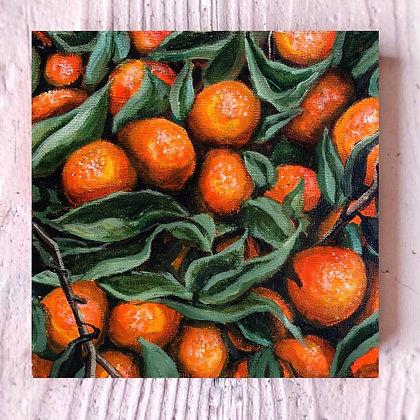 """Clementine (6""""x 6"""")"""