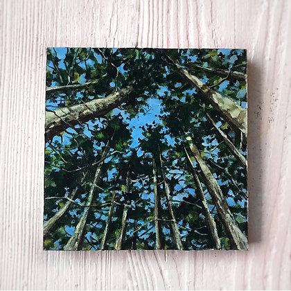 "Tree Gazing (6""x6"")"