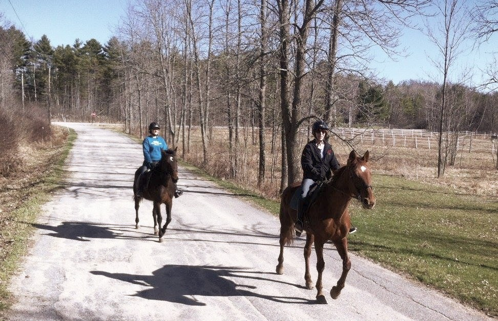 Standardbreds, trail riding.