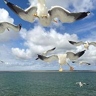 BirdsEyeView.jpg