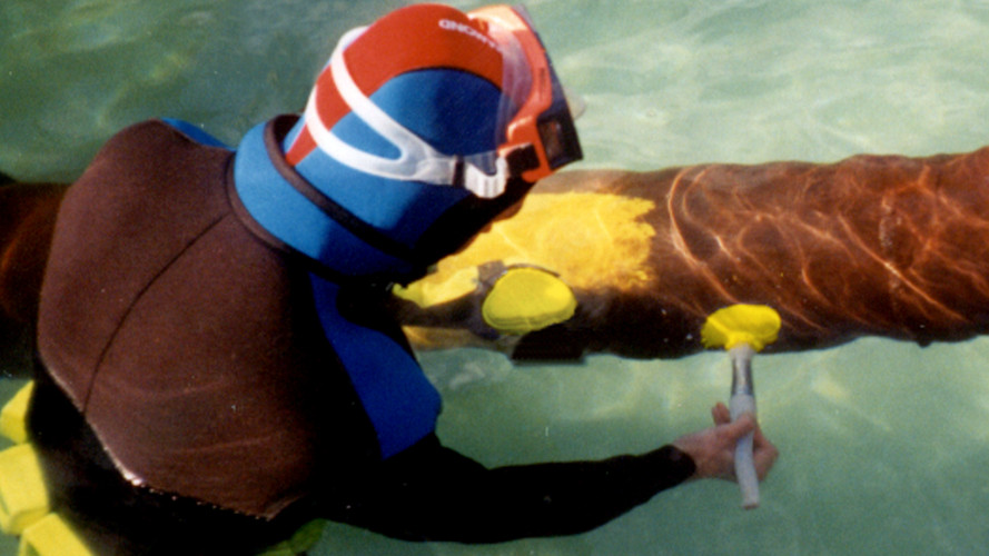 Diver hand painting