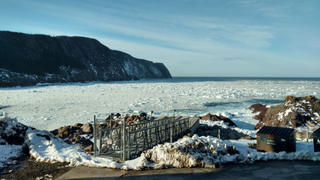 Alocit application in Newfoundland