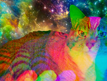 Quantum Kitty - An Intergalactic Crypto Art Show