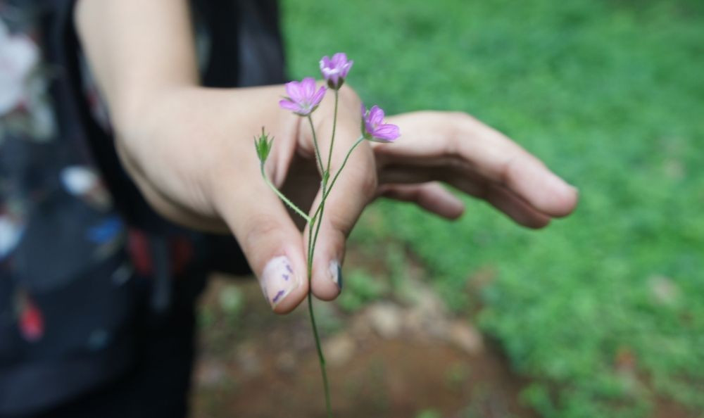 a woman holding a tiny flower