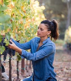 Harvest Duhig - Grower~Maker~Proprietress of Duhig Wines
