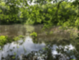 wetland pond.png