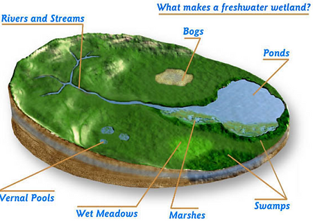 wetland graphic.png