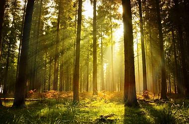 sinlight in trees.png