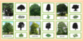 tree typs.png