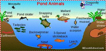 pond animals.png