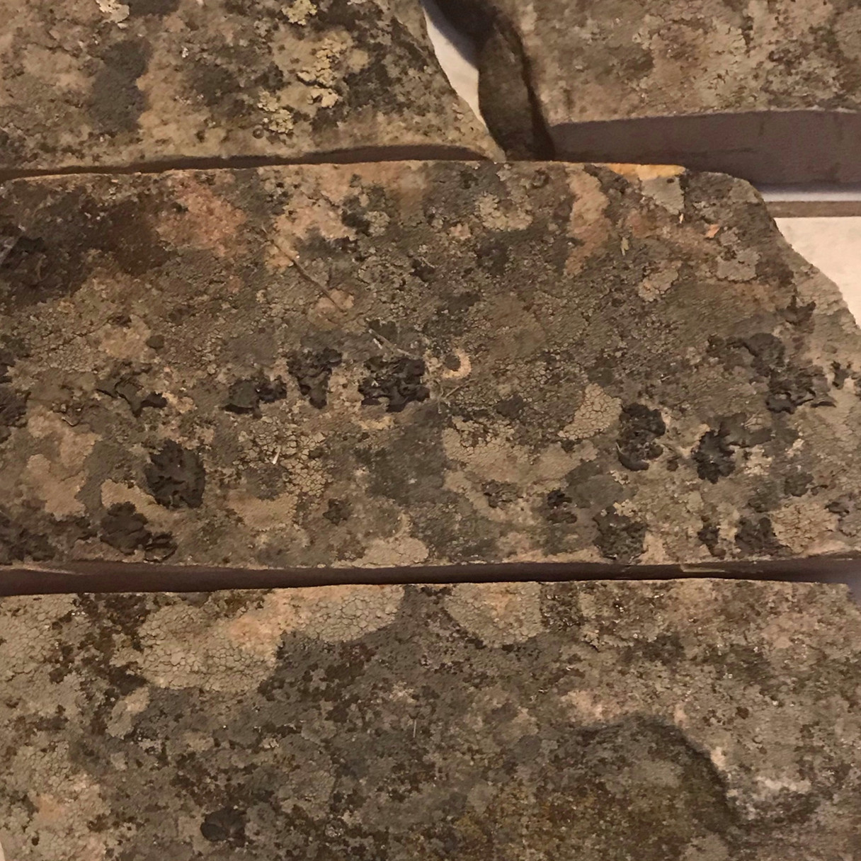 Sandstone, Moss Rock.JPG