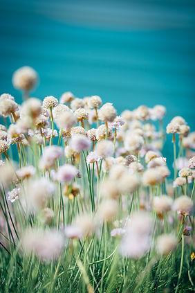 IMG_8907 flowers at beach .jpg
