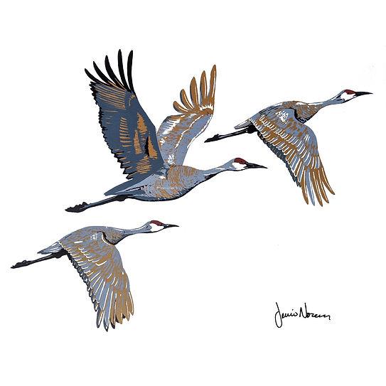 Sandhill Cranes (2).jpg