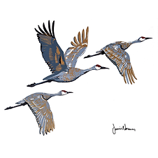 Sandhill Cranes.tif