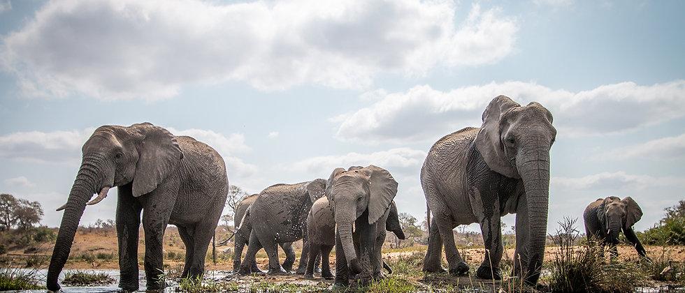 drinking-herd-of-elephants-web.jpg