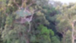 The Gibon Experience drone UAV