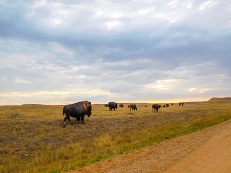Animals of the Badlands