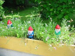 Gnomes in the flowerbox