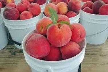 Pre Order - $30 Peach Caro King 5 Gal