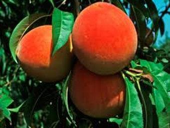 Pre Order - $24 Peach Crest Haven 3 Gal