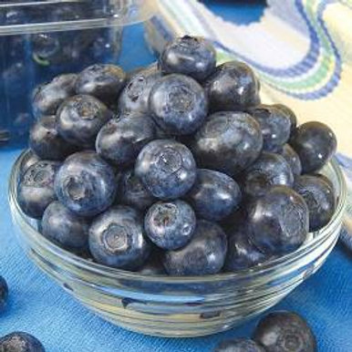 Pre Order - $14 Blueberry Patiot 1 Gal