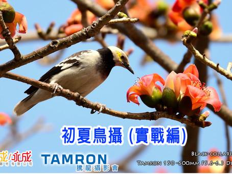 萬成MPCC & Tamron 初夏鳥攝 (實戰編)