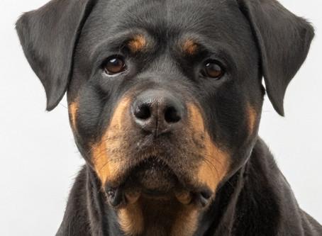Wau! Darum sollte in jedem Büro ein Hund sein.